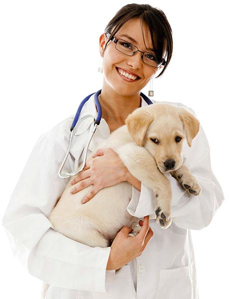 heartworm preventioin in dogs
