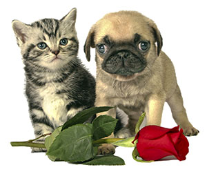 pet care tips for Valentine's Day