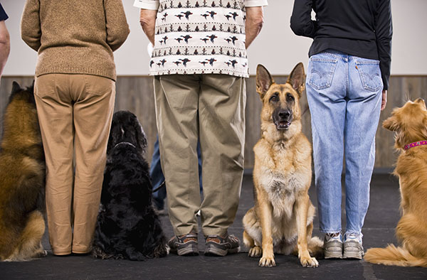 behavioral counseling for pets