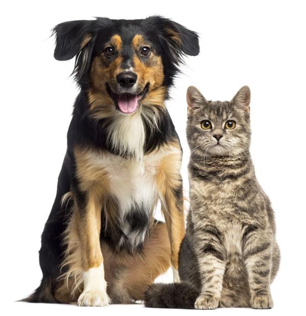 geriatric pet programs