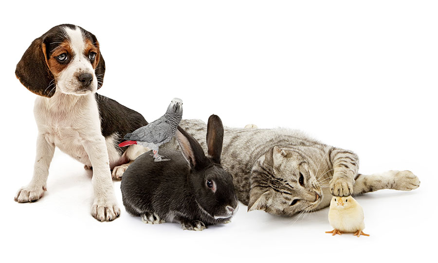 pet spaying and neutering