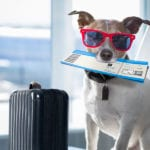 A Few Tips to Keep in Mind if You Plan to Bring Your Pet Along on Your Vacation | Valley Animal Hospital