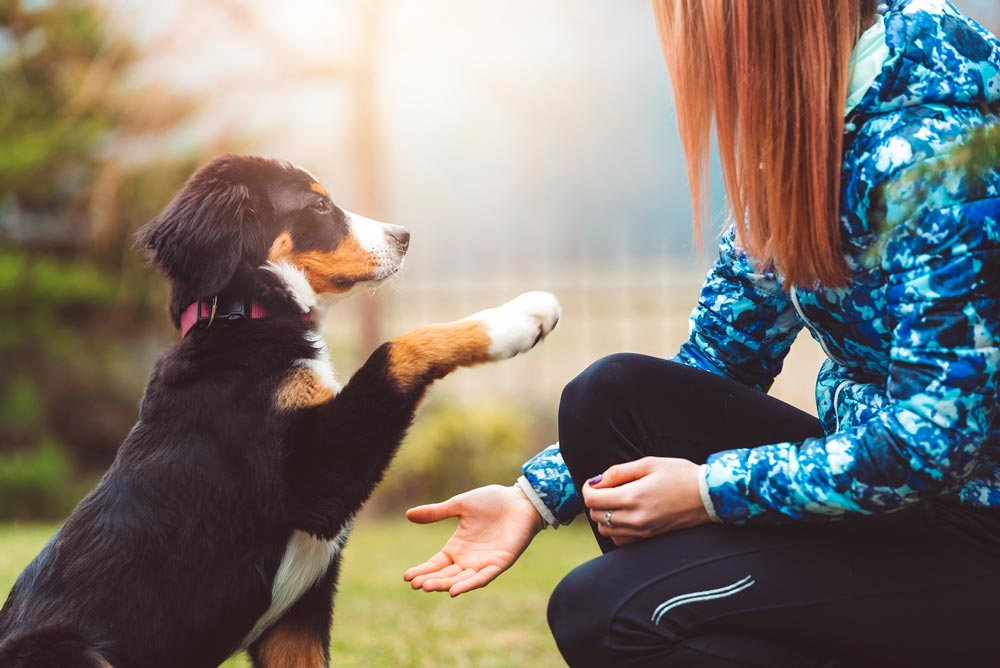 A Few Tips to Help You Exercise Your Dog's Body and Mind | Valley Animal Hospital | McAllen Pet Hospital