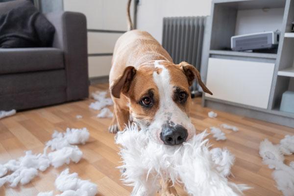 Challenge Your Pet's Mind