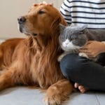 3 Tips to Enrich Your Dog or Cat's Life from our Veterinarians in McAllen