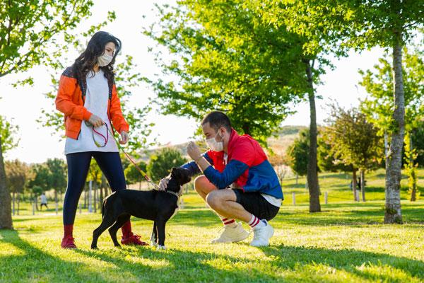Socialize Your Pets