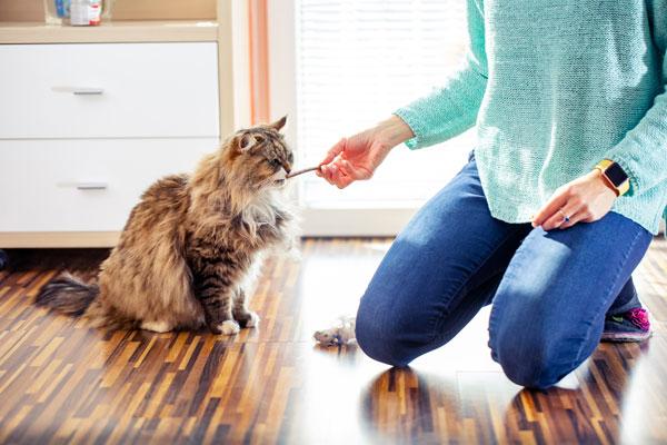 Know Your Pet's Body Behavior