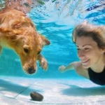 3 Things to Remember When Keeping Your Pet Safe During the Hot Summer