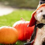 Celebrate National Pet Wellness Month with Valley Animal Hospital